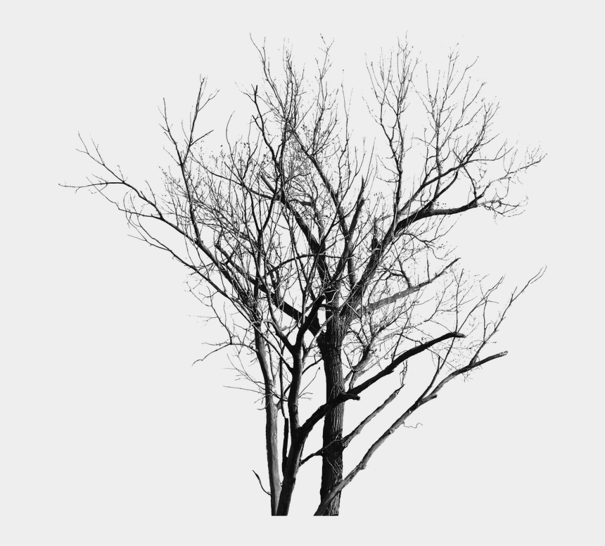 dead trees clipart, Cartoons - Dead Tree With No Leaves Free Image On Pixabay - Transparent Background Tree Leaf Png