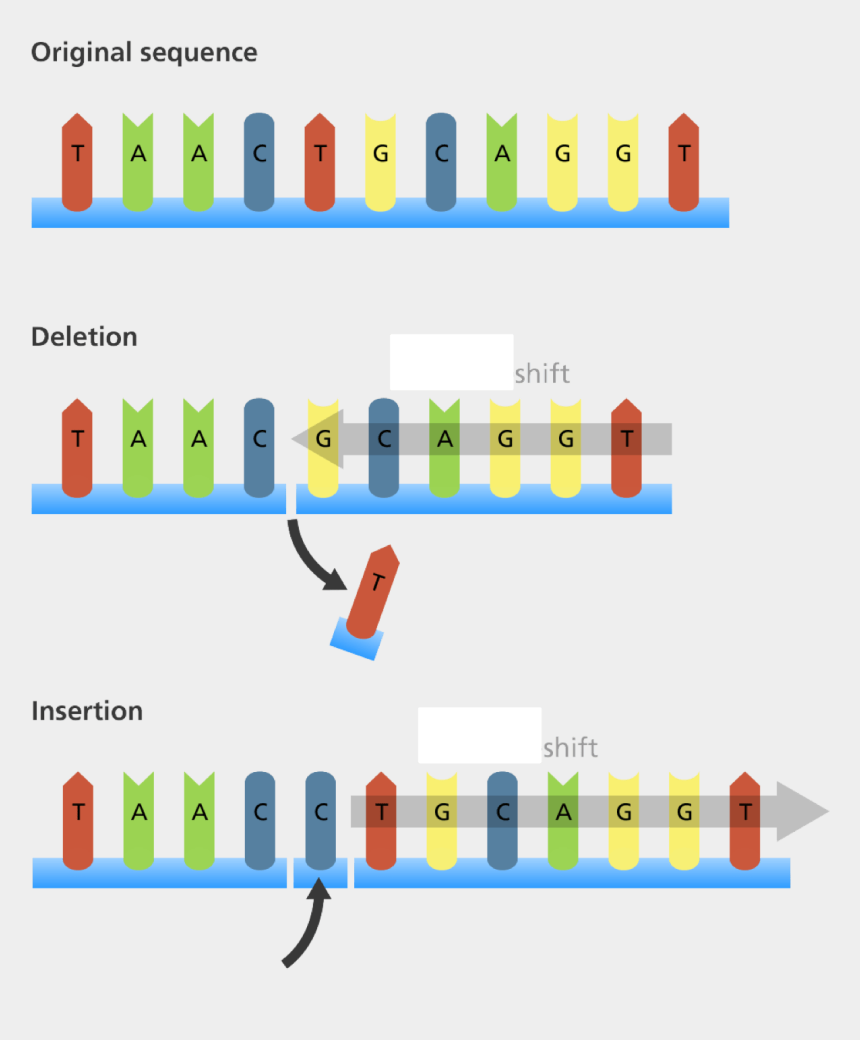 dna strand clipart, Cartoons - Image Modified From - Original Sequence Point Mutation