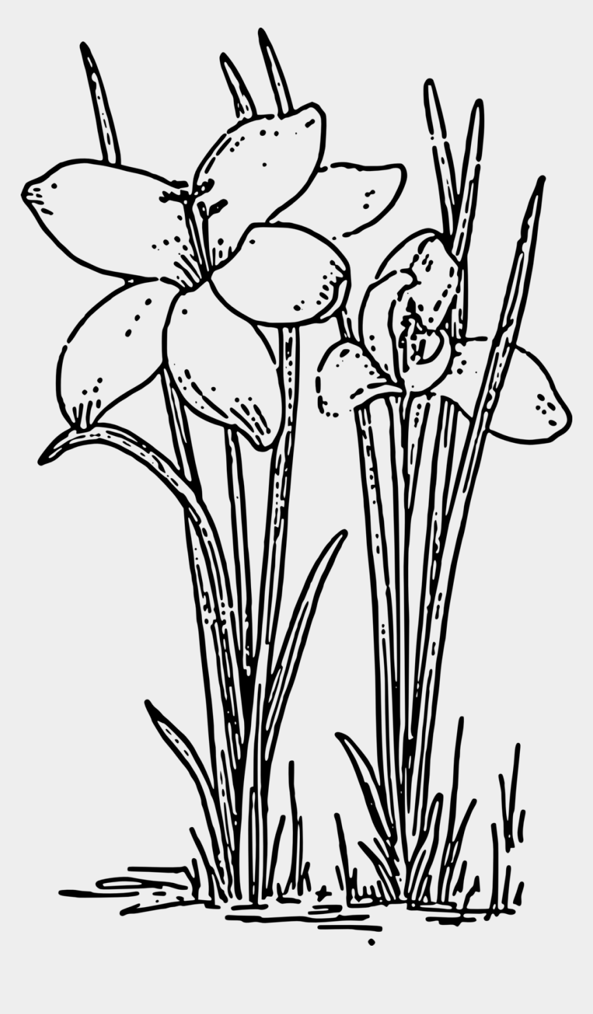 plants clipart black and white, Cartoons - Crocus 3 Coloring Book Colouring Black White Line Art - Rose Plants Black And White