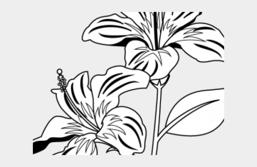 plants clipart black and white, Cartoons - Plants Clipart Gumamela - Flower Leaves Clipart Black And White