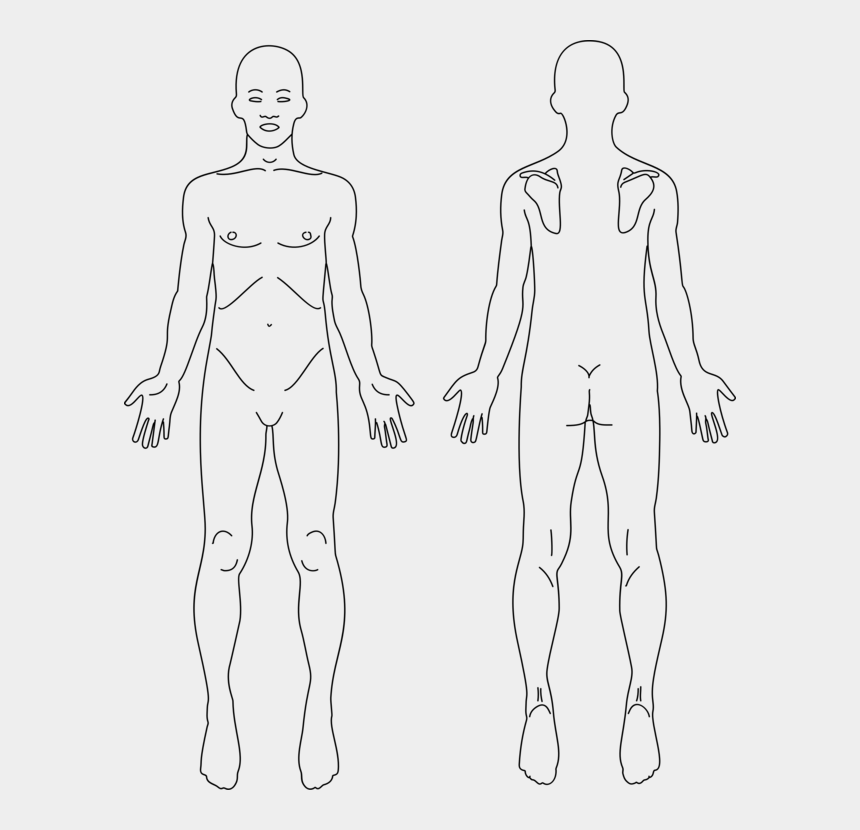 human figure clipart, Cartoons - Anatomy Human Body Human Back Diagram Organ - Human Anatomy Model Front And Back