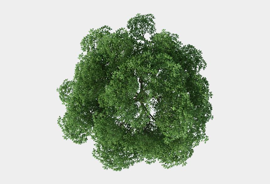 algae clipart, Cartoons - Rendering Top Tree View Download Free Image - Trees Top View Png
