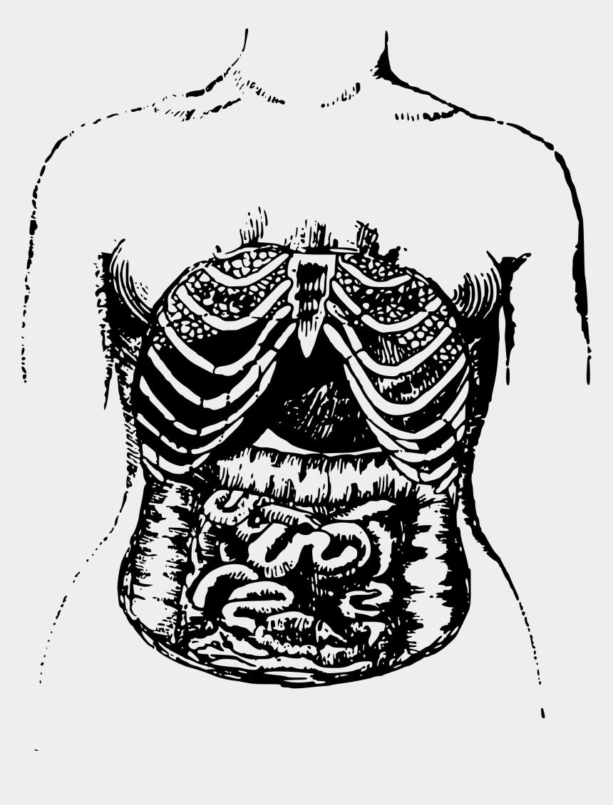 small intestine clipart, Cartoons - Clipart Internal Intestines Big Image Png - Illustration