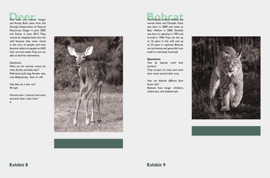 bobcats clipart, Cartoons - Transparent Scratches Bobcat - Wild Cat