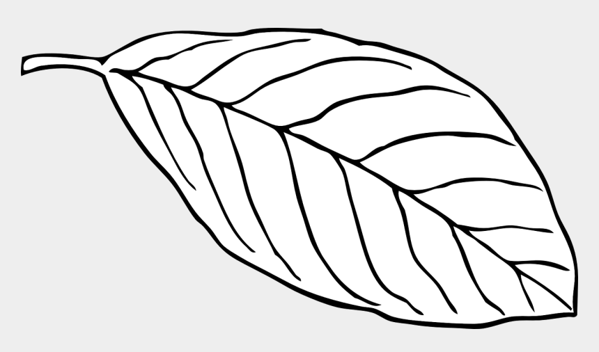 Leaf Clip Art at Clker.com - vector clip art online, royalty free & public  domain
