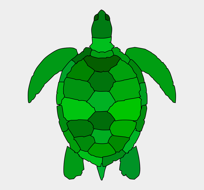 sea turtle clip art, Cartoons - Green Sea Turtle Clipart
