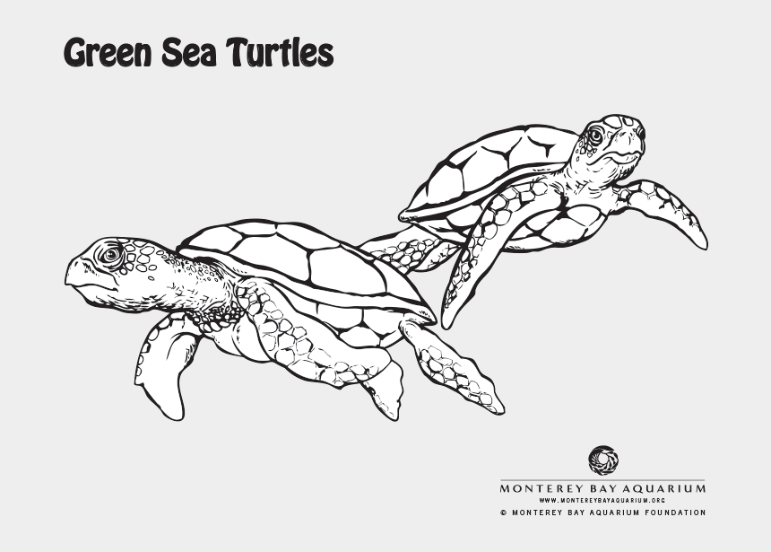 sea turtle clip art, Cartoons - Green Sea Turtle Coloring Page Lovely Giant Green Sea - Green Sea Turtles For Coloring