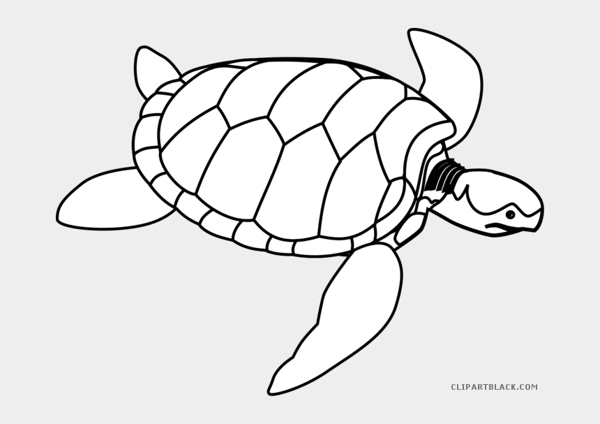 sea turtle clip art, Cartoons - Black White Collection And - Sea Turtle Line Drawing