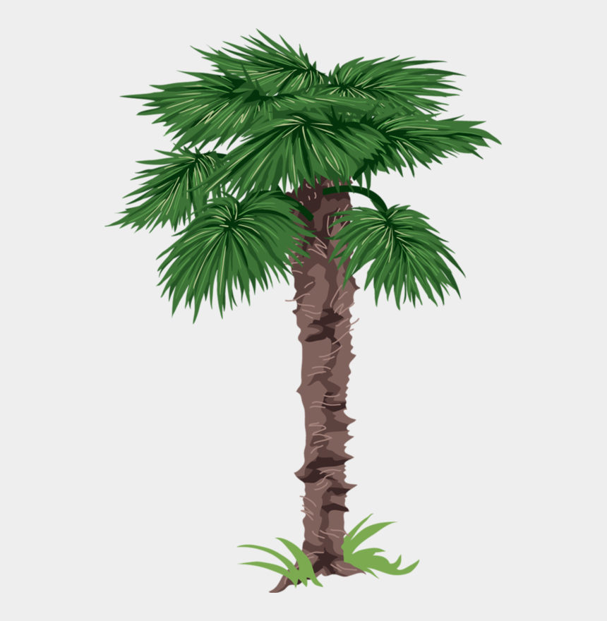 palm trees clipart, Cartoons - Фотки Palm Tree Pictures, Tree Clipart, Flannel Boards, - Borassus Flabellifer Leaves Clipart
