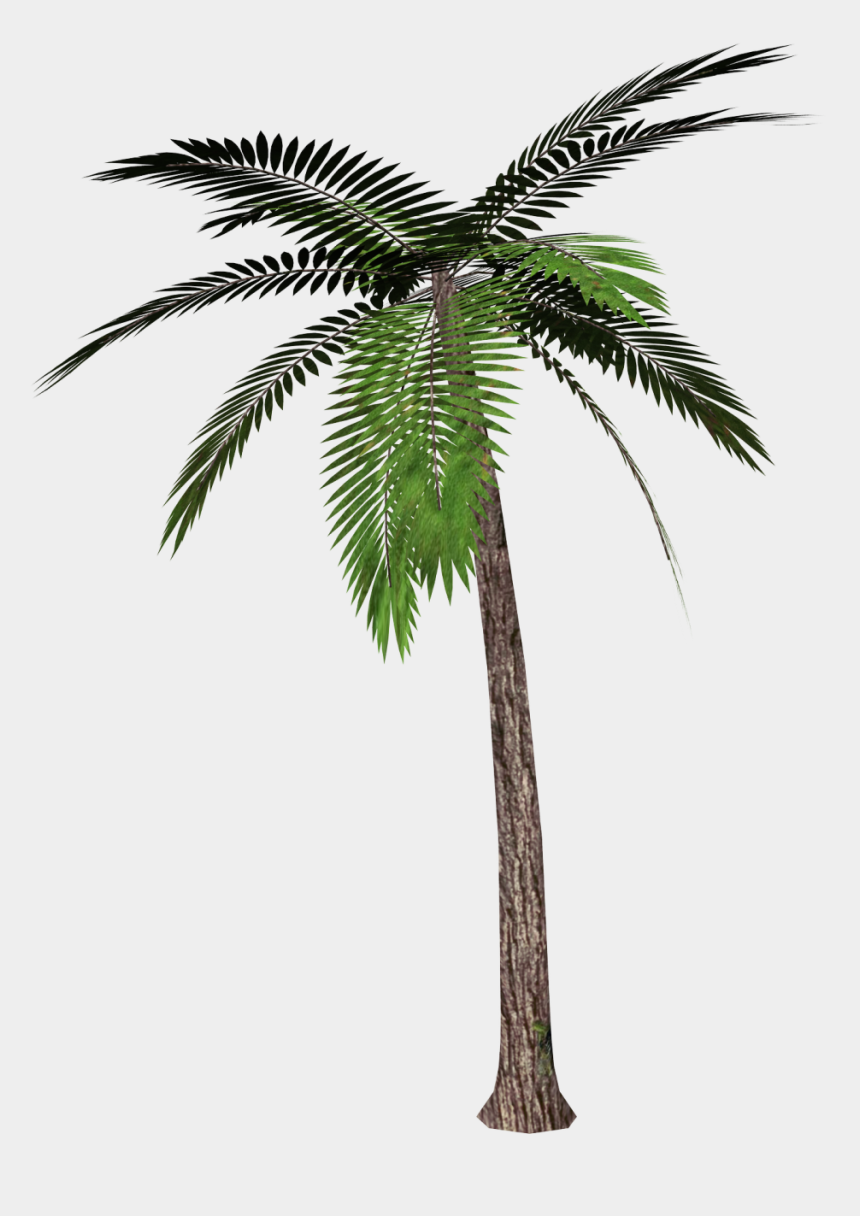 palm trees clipart, Cartoons - Palm Tree Png - Palm Tree Transparent Background