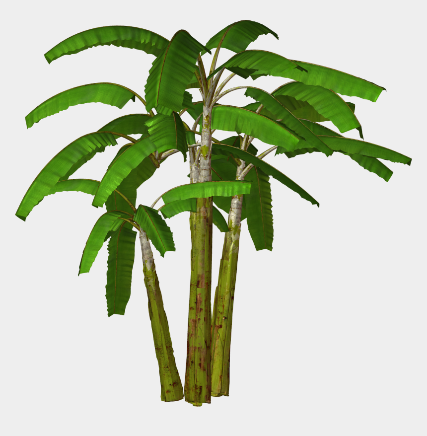 palm trees clipart, Cartoons - Download - Banana Tree Transparent Background