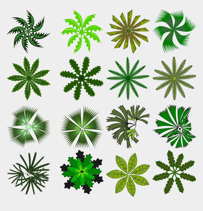 palm trees clipart, Cartoons - Palm Tree Clipart Top - Palm Png Top View