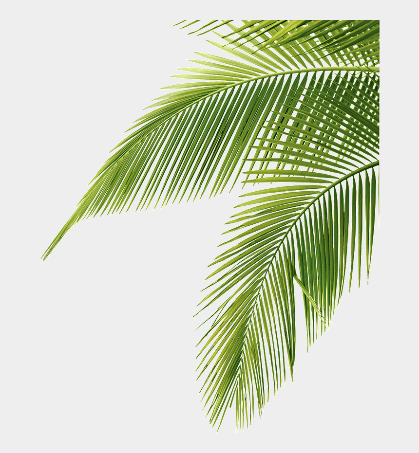 palm trees clipart, Cartoons - Palm Tree Clipart Long Tree - Palm Tree Leaves Transparent