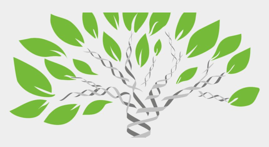 family tree clip art, Cartoons - Genealogy Dna Test Now Available For The Lowest Price - Family Dna