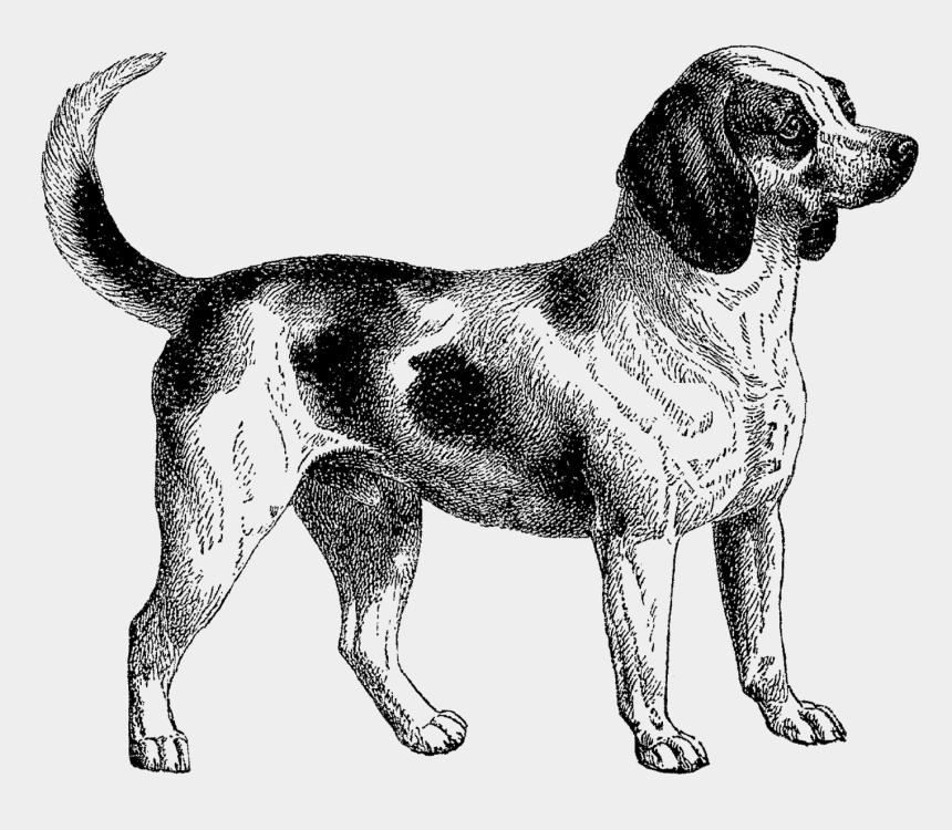 chihuahua clipart black and white, Cartoons - Vintage Dog, Vintage Images, Art Vintage, Dog Clip - Dog Vintage Clip Art