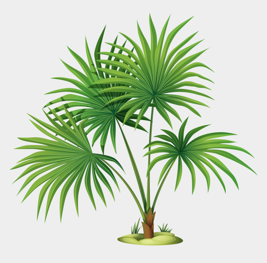 palm tree clipart png, Cartoons - Palm Tree Leaves Clipart , Png Download - Palm Tree With Translucent Background