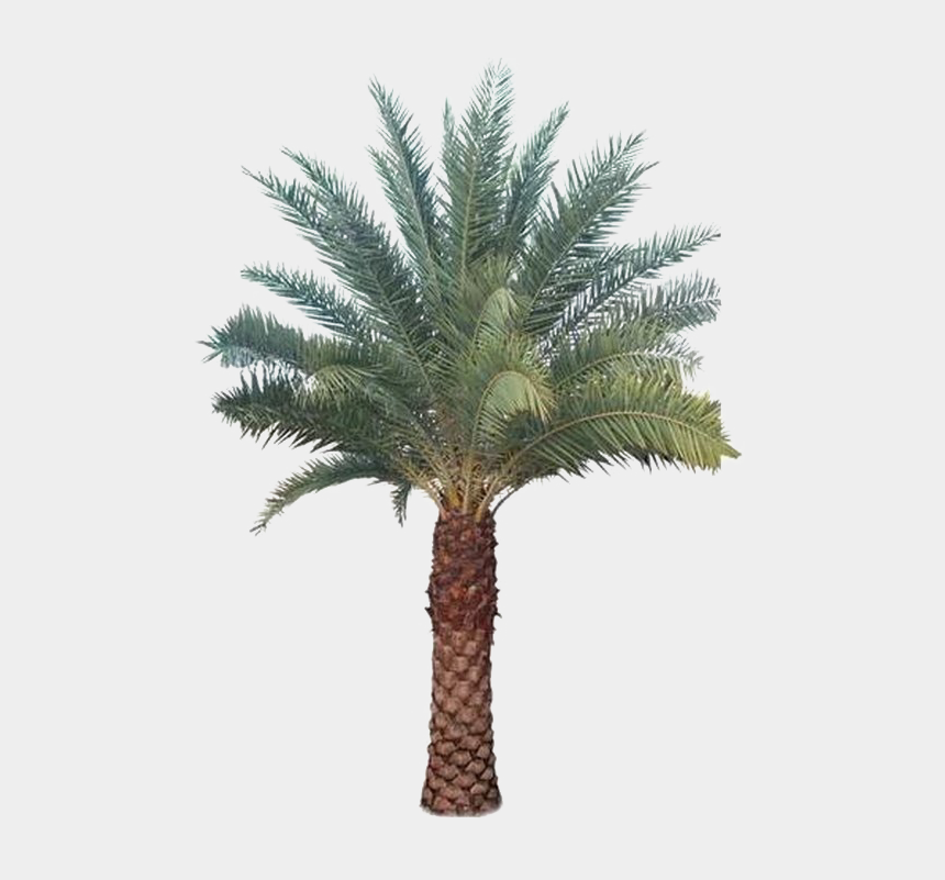 palm tree clipart png, Cartoons - Palm Tree Transparent Images - Date Palm