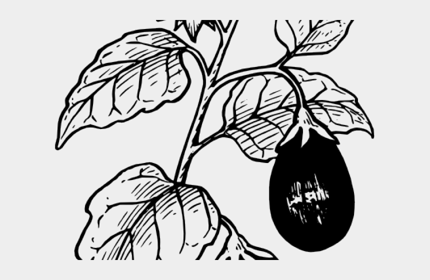 tomato clipart black and white, Cartoons - Original - Brinjal Tree Drawing Easy