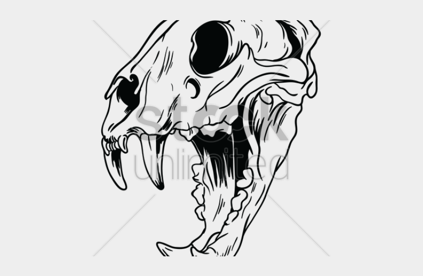 brontosaurus clipart black and white, Cartoons - Skeleton Clipart Tiger - Animal Skull Clipart Black And White