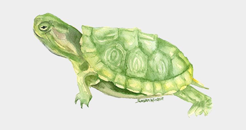 schildkröte clipart, Cartoons - Turtle Drawing Watercolor Painting - Watercolor Painting