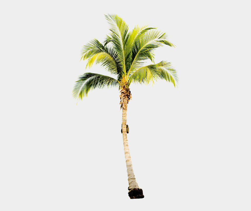 coconut clipart black and white, Cartoons - Palm Trees Tumblr Black And White - Single Palm Tree