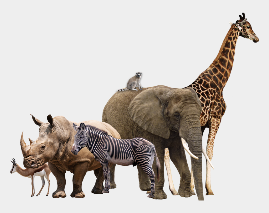 african animals clipart, Cartoons - Wild Animal Png - Transparent Background Animals Png