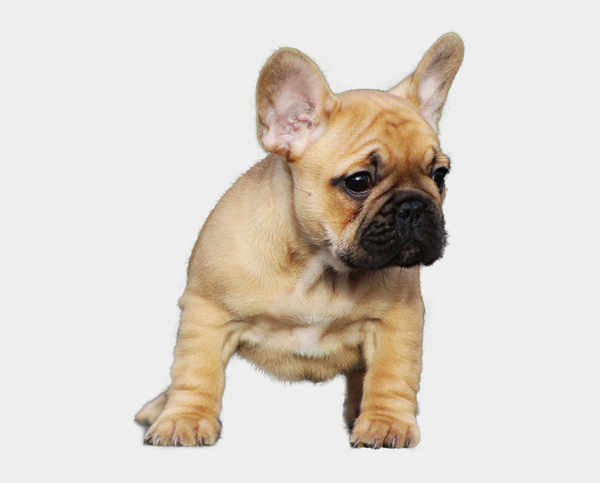 french bulldog clipart, Cartoons - Bulldog Png Transparent Images - French Bull Dog Puppy Png
