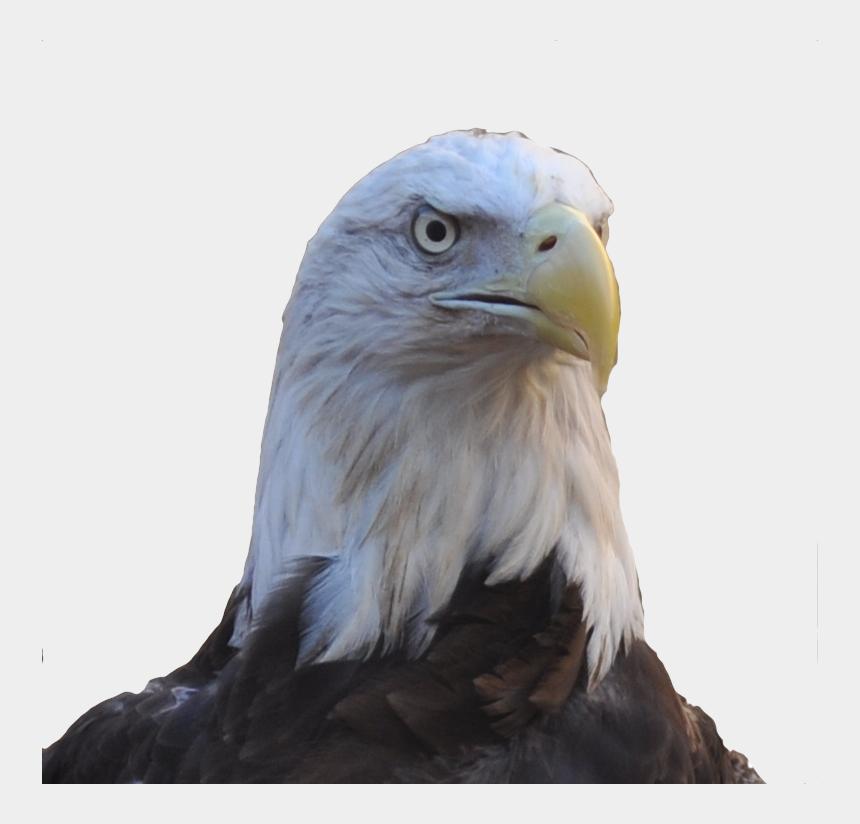 eagle head clipart, Cartoons - Allegiant Our Female Bald Eagle - Buzzard