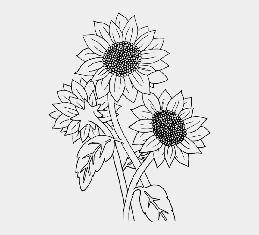 sunflower clipart black and white, Cartoons - Drawing Sunflowers Black And White - Transparent Sunflower Drawings