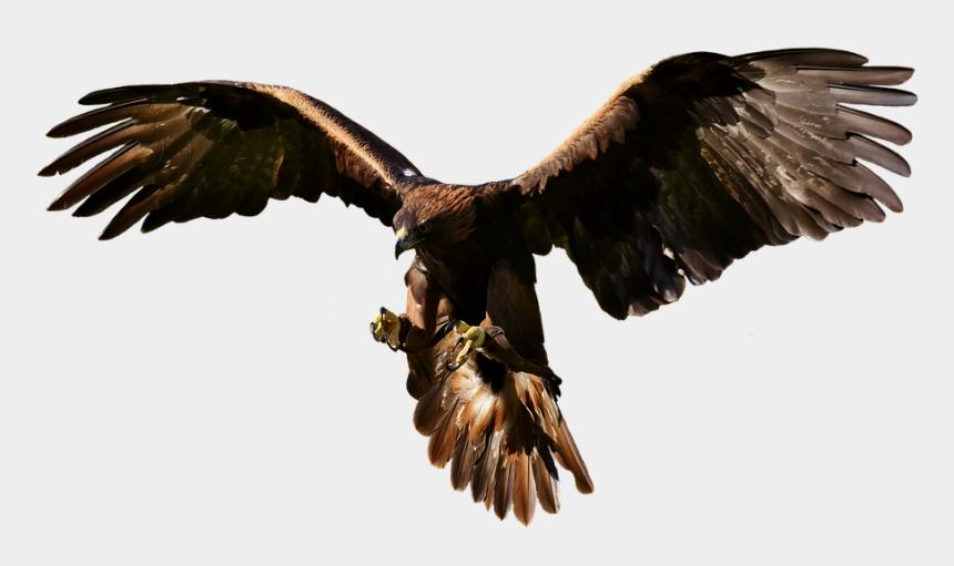 flying eagle clipart, Cartoons - Flying Eagle - Eagle