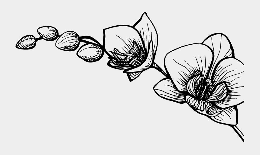 scratch clipart, Cartoons - Massages Clipart Back Scratch - Rose