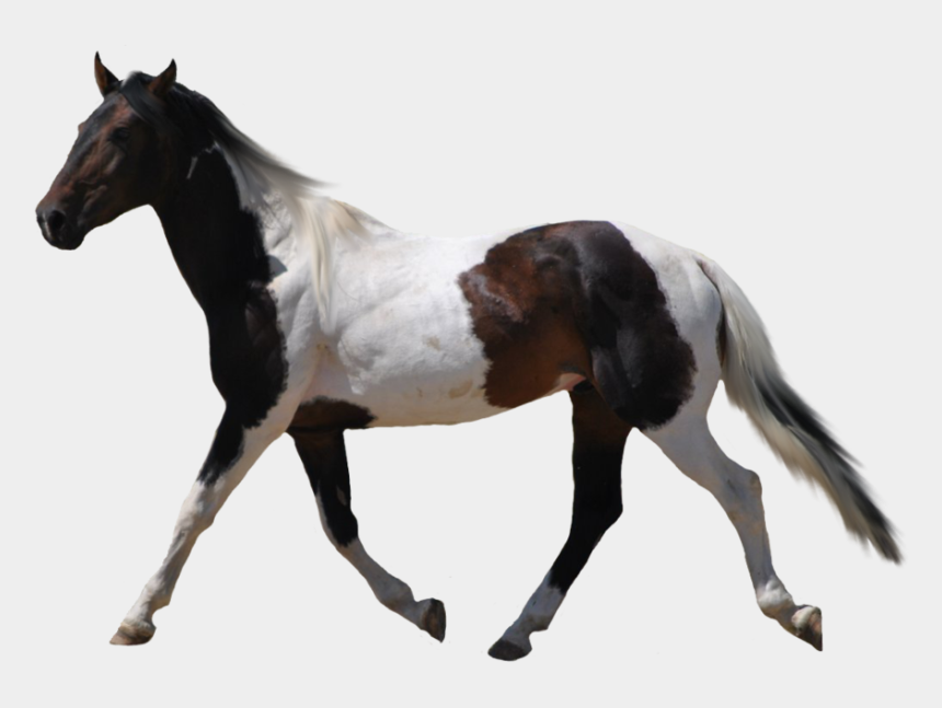 mustang horse clipart, Cartoons - Transparent Horses - Horses With Transparent Backgrounds
