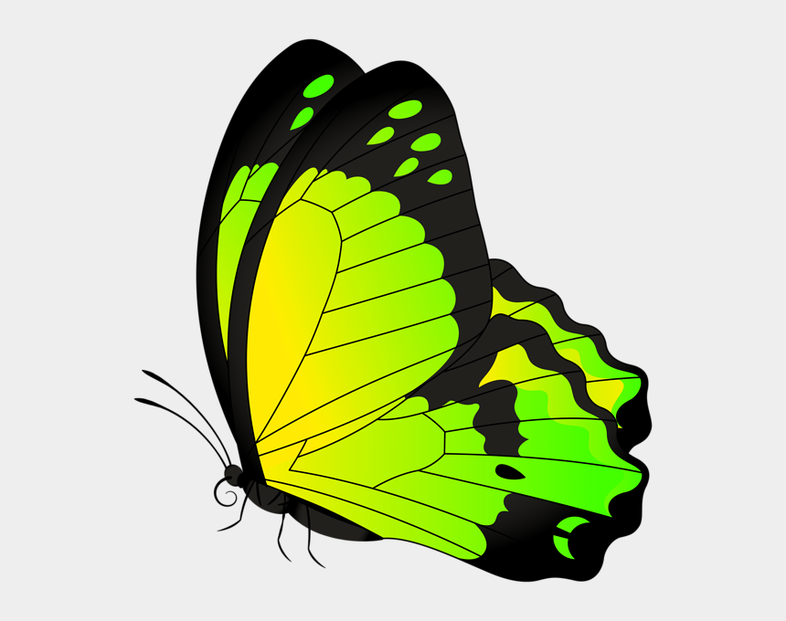 butterfly border clipart, Cartoons - Monarch Butterfly Full Color - Yellow And Green Butterflies