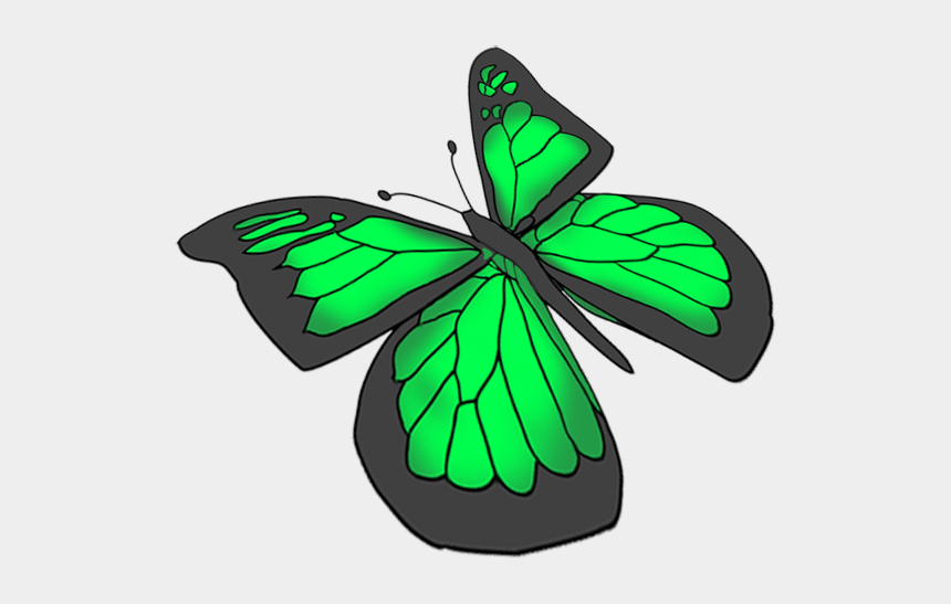 flying butterfly clipart, Cartoons - Green Butterfly Drawing At Getdrawings - Transparent Background Butterflies