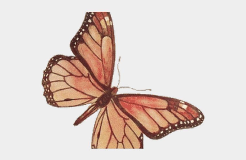 monarch butterfly clipart, Cartoons - Monarch Butterfly Clipart Transparent - Vintage Butterfly Clip Art