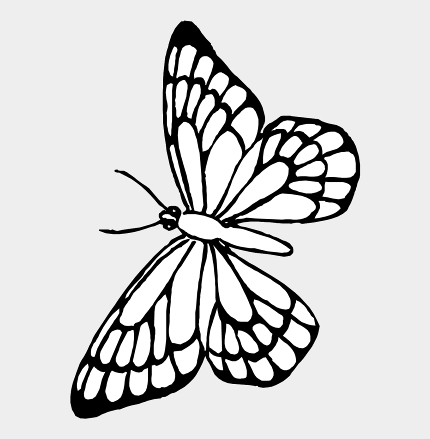Pin Butterfly Outline Clipart - Colouring Clipart Of Butterfly, Cliparts &  Cartoons - Jing.fm