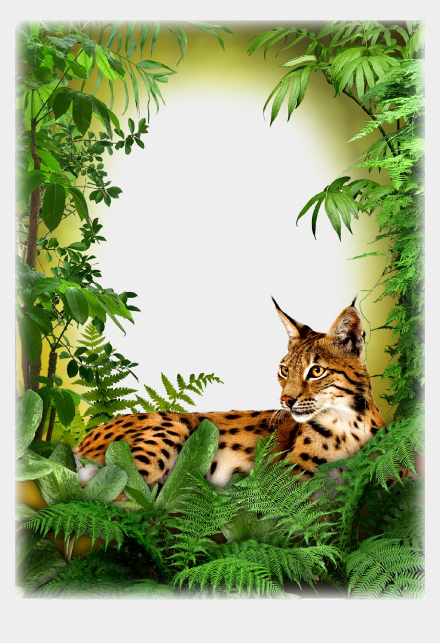jungle background clipart, Cartoons - Photo Frame - Jungle Cat - Marcos Para Caratulas De Biologia