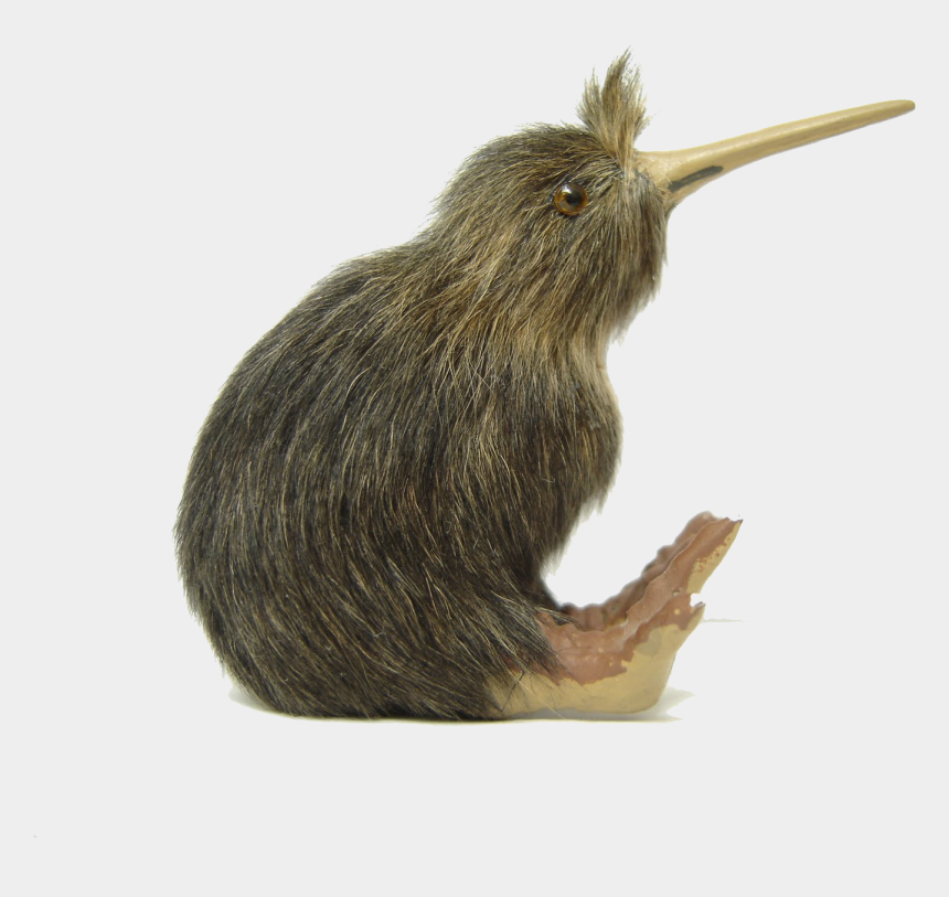 kiwi bird clipart, Cartoons - Kiwi Bird Clipart Transparent - Kiwi Bird Kiwi Transparent Background
