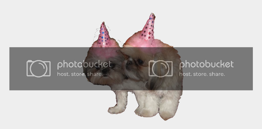 pet shop clipart, Cartoons - Have The Best Dog Birthday Possible - Dogs With Party Hats Png