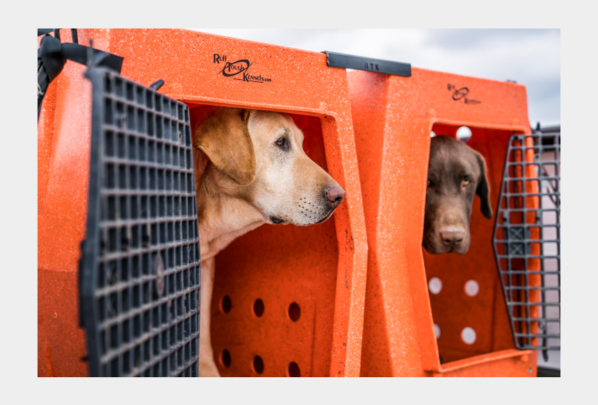 Ruff Tough Kennels >> Doghouse Clipart Dog Crate Ruff Tough Kennels Orange