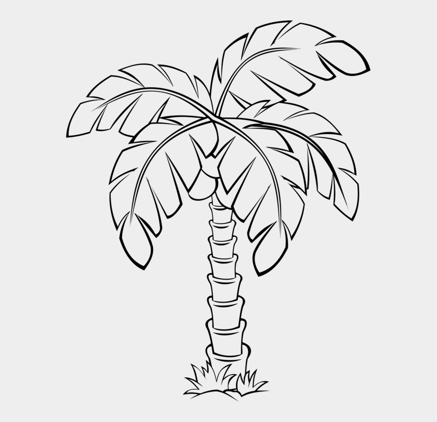 palm trees clip art, Cartoons - Sabal Palm Palm Trees Flowering Plant Drawing - Sabal Palm Tree Drawing