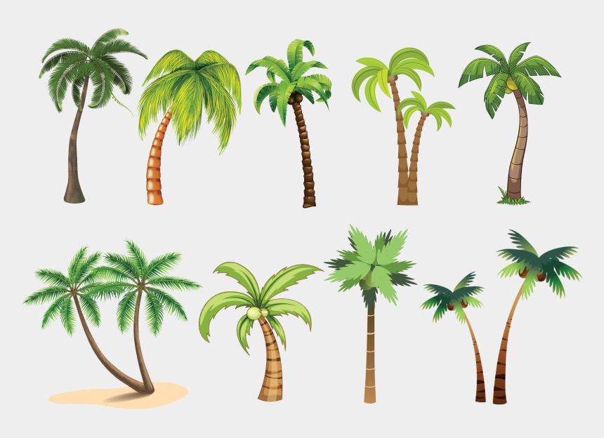 palm trees clip art, Cartoons - Palm Tree Clip Art , Png Download - Attalea Speciosa