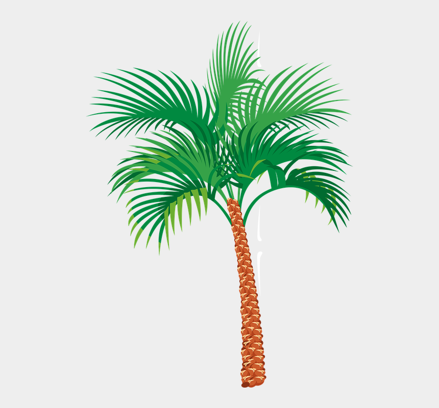 palm trees clip art, Cartoons - Palm Tree Graphics - Date Palm Vector Png
