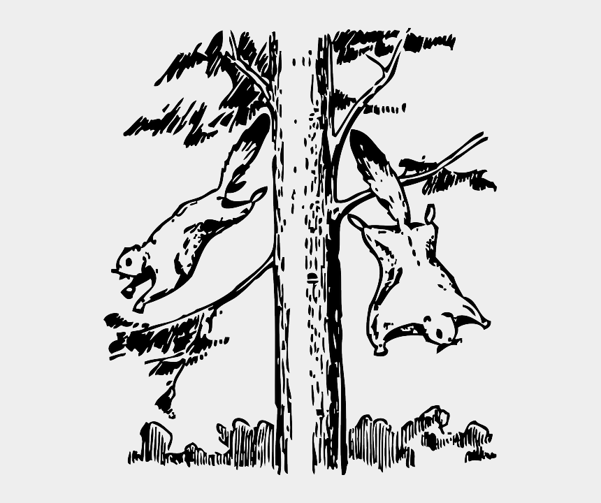 squirrel clipart black and white, Cartoons - Animals, Outline, Tree, Cartoon, Flying, Squirrel - Flying Squirrel Habitat Drawing