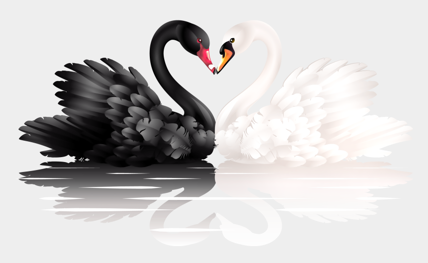 feather clipart black and white, Cartoons - White And Black Swans With Heart Shape Clipart - Drawing Two Swans Making A Heart