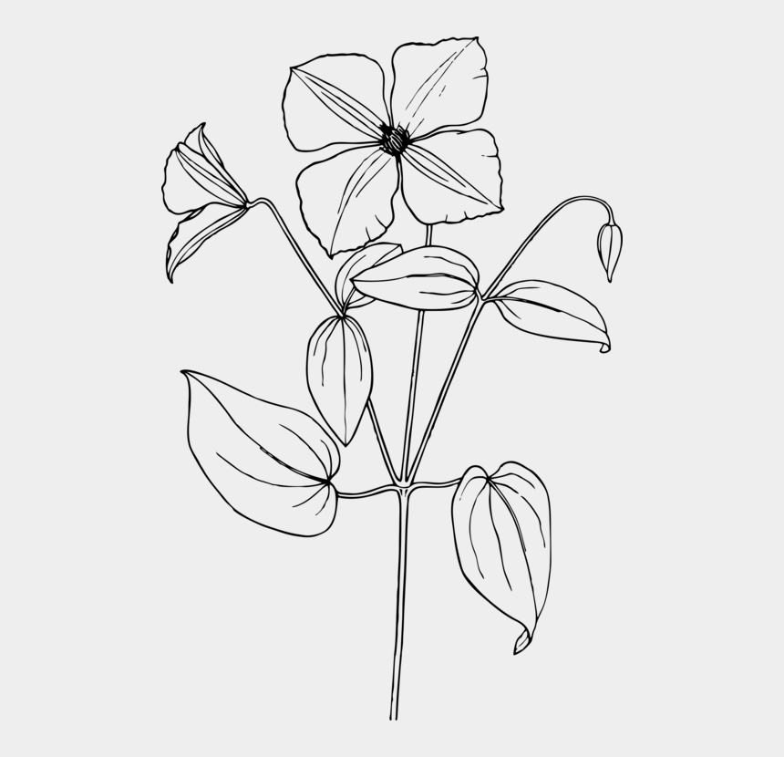 jasmine flower clipart, Cartoons - Arabian Jasmine Drawing Line Art Flower Coloring Book - Sampaguita Flower Drawing Easy