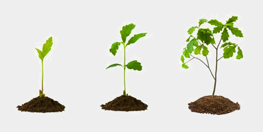 growing plant clipart, Cartoons - Growing Plant Png Picture - Oak Tree Growing