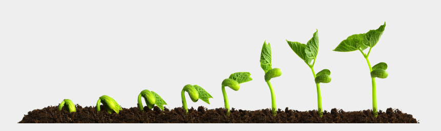 growing plant clipart, Cartoons - Grow Png Transparent Picture - Growing Plant