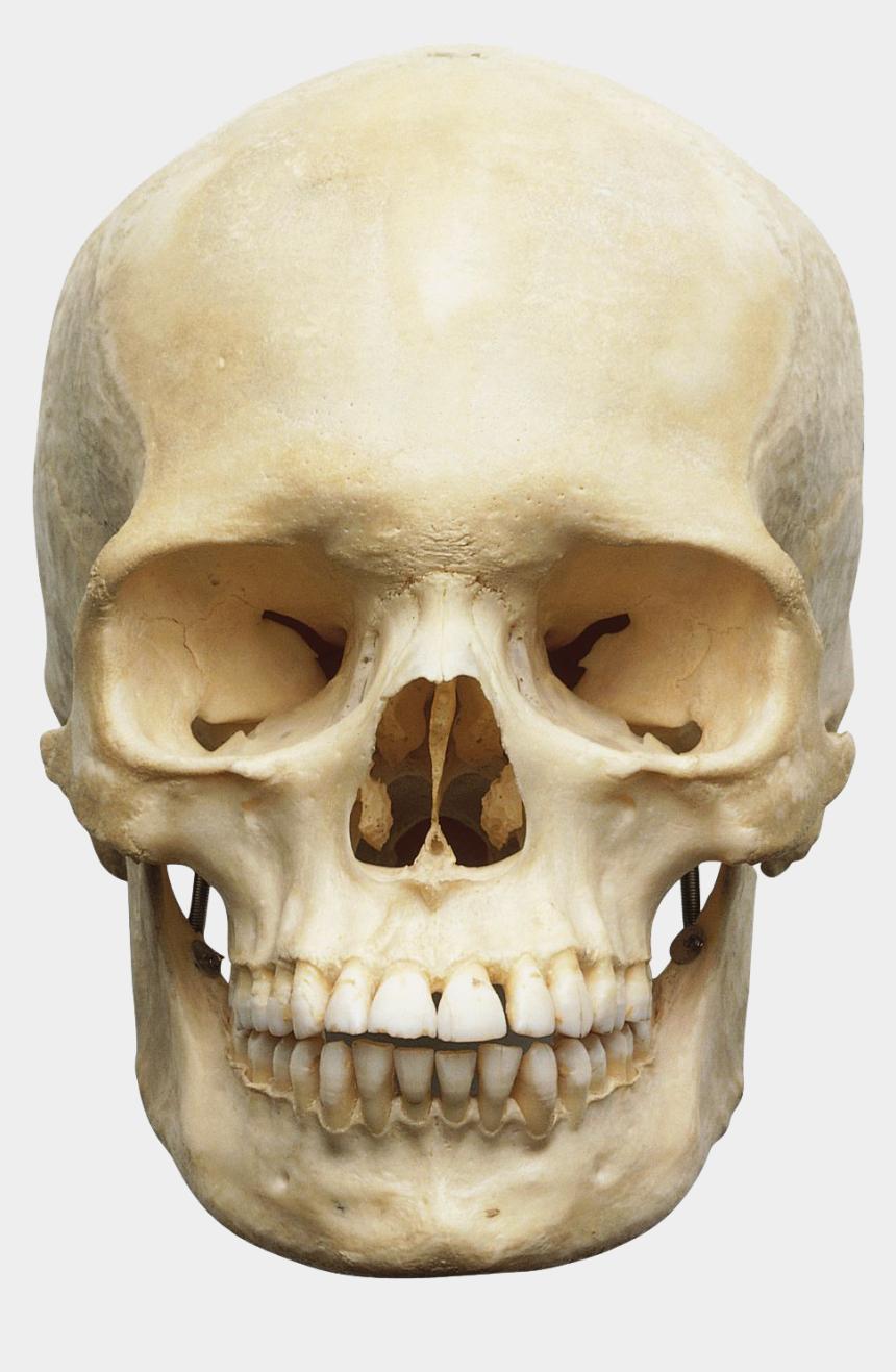 skeleton head clipart, Cartoons - Skeleton Head Png Image Png Image Skeleton Head Png - Head Skeleton Png