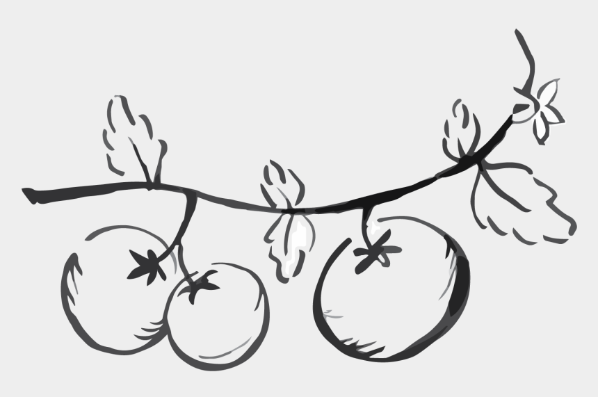 tomato plant clipart, Cartoons - Tomatoes Drawing Black And White - Line Art
